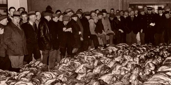 Partij schelvis 1938